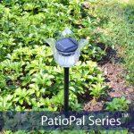 Patiopal-tulip-flower-1.jpg